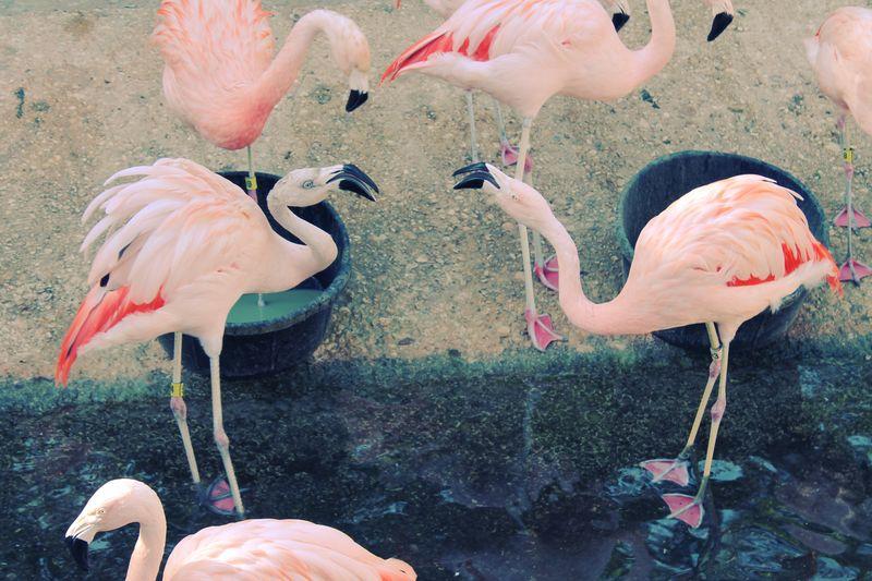 Flamingo Colorcross 2