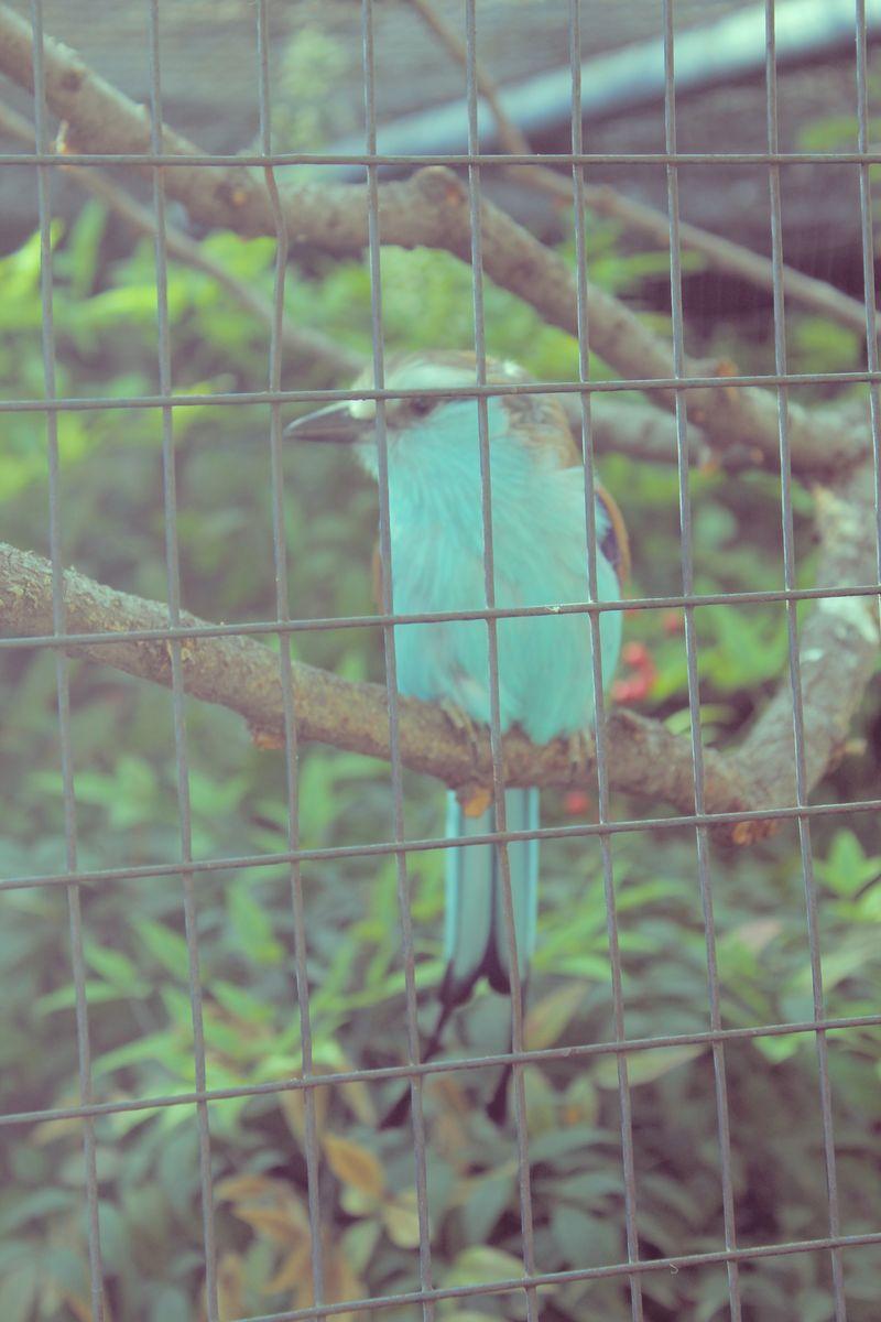 Blue Bird 1958
