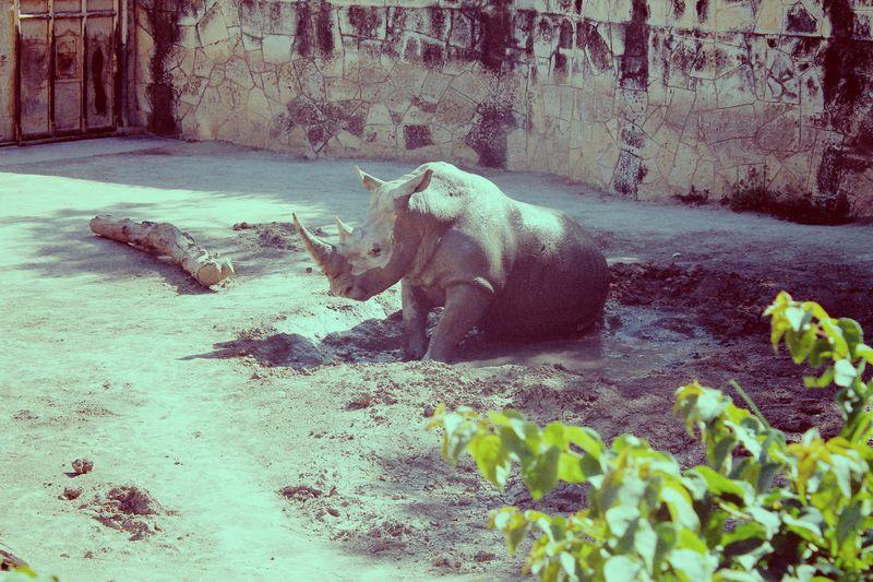 Rhino 1983