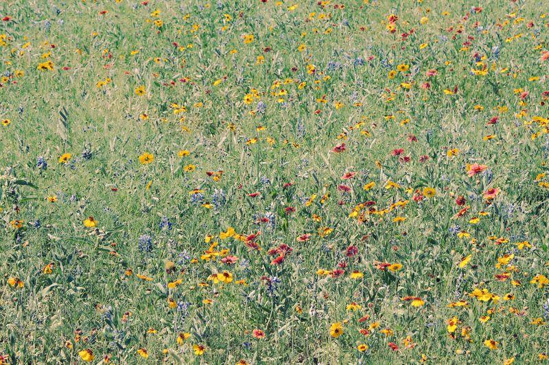 Far Away Flowers