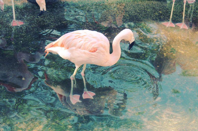 Flamingo Colorcross