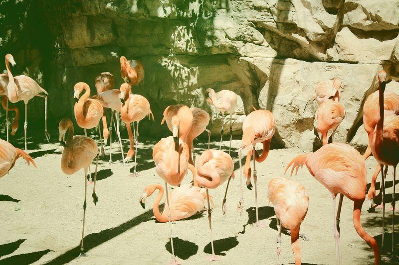 Flamingo Instant