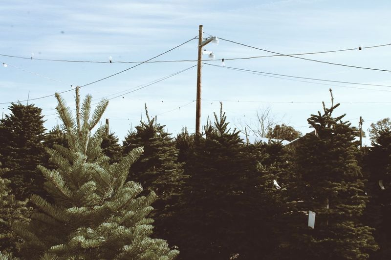 TreeFive