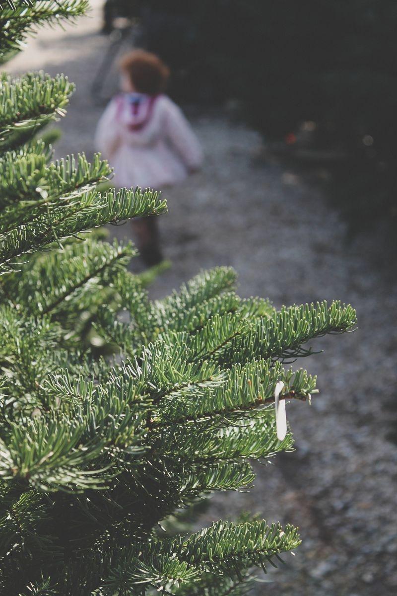 TreeTwelve